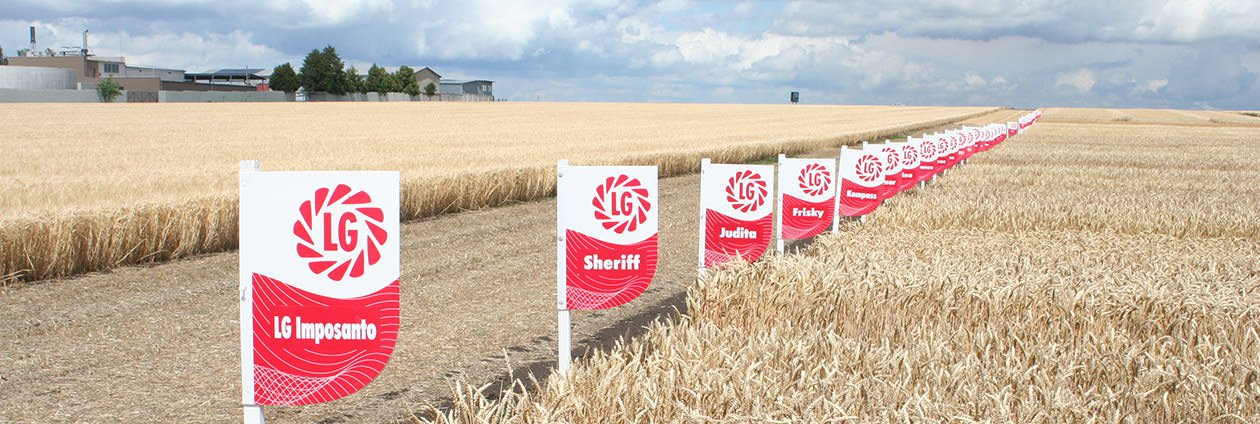 section img